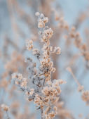 Sagebrush in winter — Stockfoto