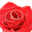 Wedding concept with roses and rings — ストック写真