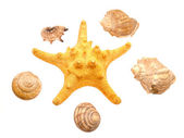 Bowls of mollusks and a starfish — Stock Photo