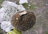 Hedgehog on his arm — Stock Photo
