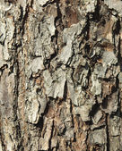 Bark of a larch — Stock Photo