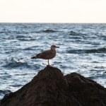 Sea bird on the rock — Stock Photo