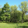 Stock Photo: Summer park, trees