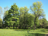 Summer park, trees — Stockfoto