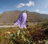Montañas de flores de campana — Foto de Stock