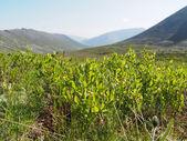 Plantas en las montañas — Foto de Stock