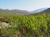 Plants in the mountains — Стоковое фото