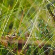 Frog in the grass — Stock Photo
