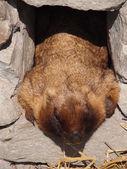 Animal marmot — Stock Photo