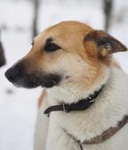 Dog on snow — Stock Photo