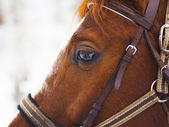 Horse eye — Stock Photo
