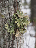 Mosses and lichens on tree — Foto de Stock