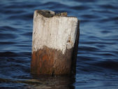 Old piles in the lake — Stock Photo