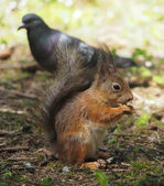 Squirrel in the forest — Stock Photo