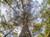 Korony drzew — Zdjęcie stockowe