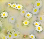 Shined and hazed abstract floral background with chamomile on grass — Stock Photo