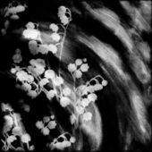 Floral card with abstract may lily on grunge striped background in black and white colors — Stock Photo