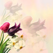 Greeting floral card with tulips and narcissus on hazy background in pastel colors — Stock Photo