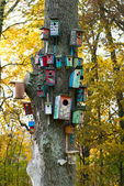 Colorful birds houses — Stock Photo