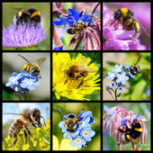 Bees and bumblebees mosaic — Stock Photo
