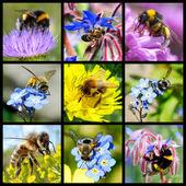 Bees and bumblebees mosaic — Stock Photo