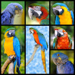 Mosaic photos of parrots — Stock Photo