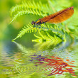 Macro damselfly on fern above water — Stockfoto #12467575