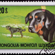 Stamp with Mongolian sheepdog — Stock Photo