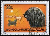 Stamp with Shepherd dog — Stock Photo