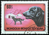 Stamp with Mongol hausdog — Stock Photo