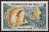 Stamp with butterflyfish — Stock Photo