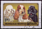 Stamp with Cocker spaniel et Poodles — Stock Photo