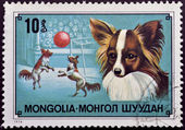 Stamp with circus dog — Stock Photo