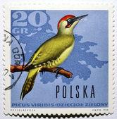 Známka s žluna zelená — Stock fotografie