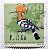 Stamp with hoopoe — Stock Photo