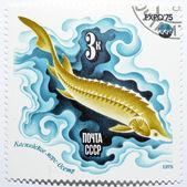 邮票以鲟鱼 — 图库照片