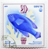 Briefmarke mit mönchsfisch — Stockfoto