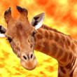 Portrait of giraffe under a glowing sky — Stock Photo #37224421