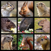 Mosaic photos of rodents — Stock Photo