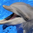 Stock Photo: Head of  bottlenose dolphin