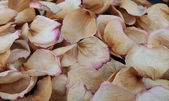 Dry rose petals — ストック写真