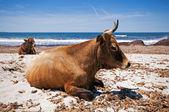 Ostriconi beach — Stock Photo
