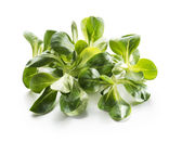 Valerianella salat — Stockfoto