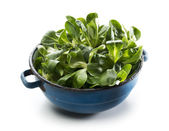 Valerianella salad — Stock Photo