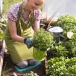 Gardening — Stock Photo #27560411