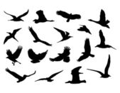 Collection d'oiseaux. — Vecteur
