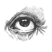 Eye. Realistic vector illustration. Hand drawn. — Stock Vector