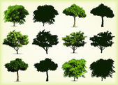 Arbres de collection vert. illustration vectorielle — Vecteur