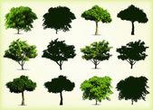 集合绿色的树木。矢量插画 — 图库矢量图片