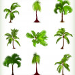 Set of various palm trees. Vector illustration - 图库矢量图片